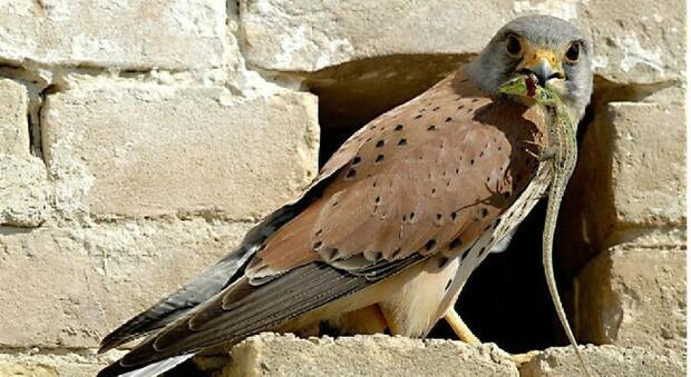 Ambiente, presentato l'Atlante degli Uccelli nidificanti in Friuli Venezia Giulia