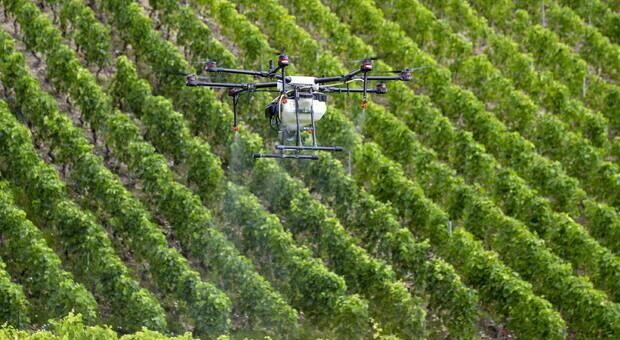 Europa-Regioni, progetto dell'Emilia Romagna tra i finalisti dei RegioStar2021: obiettivo formare esperti di agricoltura digitale