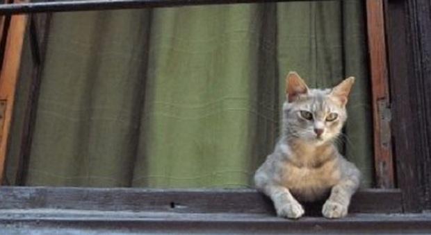 Lascia in casa una finestra aperta per il gatto entra un for Finestra gatto