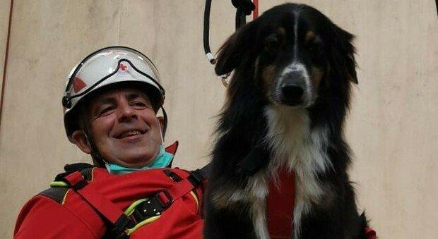 Uno dei due cani della Croce Rossa che sta lottando per sopravvivere dopo l'avvelenamento