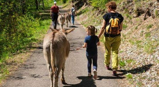 Asini maltrattati, ora fanno giocare i bambini: sequestrati in Emilia Romagna e rinati grazie a due sorelle