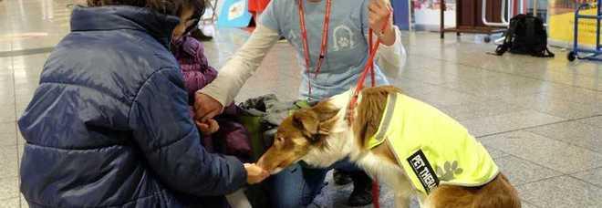 Hai il terrore dell 39 aereo arriva il cane anti panico for Cane nella cabina dell aereo