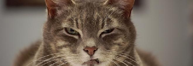 Perch i gatti entrano nelle scatole e si fanno le unghie sul divano le abitudini feline - Perche i cani scavano sul divano ...