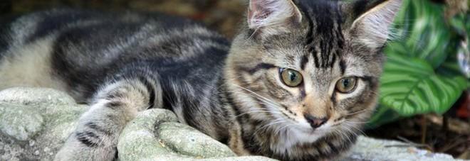 Rapiscono il gatto della vicina in ferie: coppia a processo