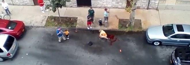 Persone Attaccate Da Pitbull.Uomo Aggredito In Strada Da Due Pitbull Lasciato In Una Pozza Di Sangue