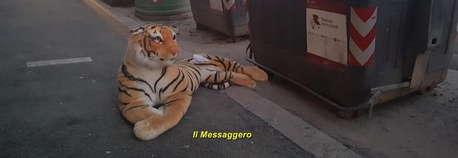 «Aiuto, c'è una tigre davanti al cassonetto» /Foto