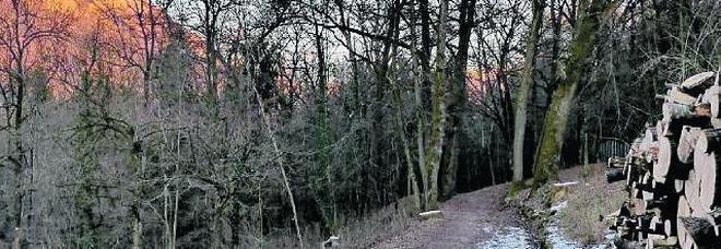 Venticinque alberi secolari da abbattere per far spazio alle linee elettriche Enel