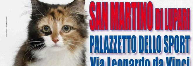 www bello micio pic com gay bikers porno