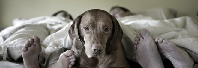 Il cane dorme nel letto con voi e 39 sbagliato ecco perch - Perche i cani scavano sul divano ...