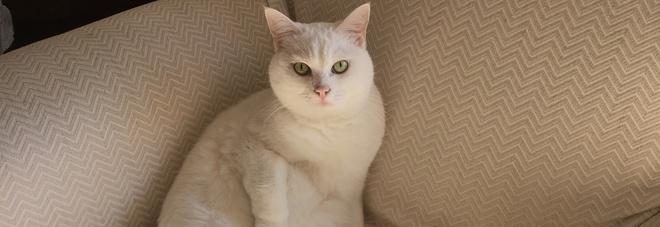 Asma gatto in casa protegge i bambini ad alto rischio - Gatto defeca per casa ...