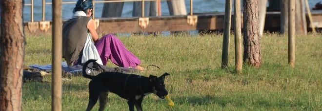 Fuori con il cane in orario di lavoro:  dipendente comunale licenziata