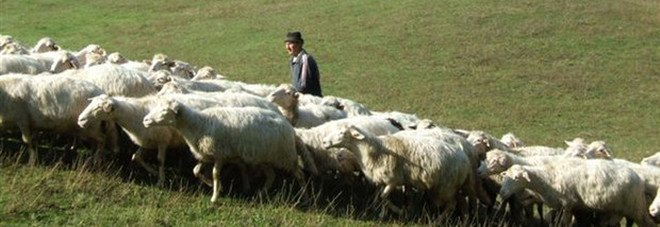 Lingua blu 104mila vaccini per le pecore delle tre - La pagina della colorazione delle pecore smarrite ...