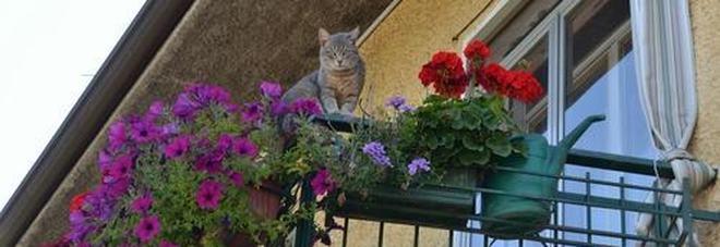 Mette in fuga i ladri del bancomat lanciando vasi di gerani dal terrazzo