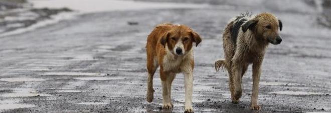 Emergenza randagismo 750mila cani abbandonati for Luoghi abbandonati nord italia