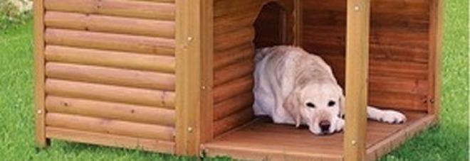 Box Abusivi Il Comune Ordina Di Demolire Perfino La Cuccia Del Cane