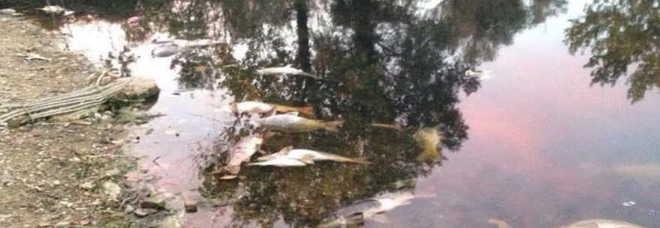 Moria di pesci al laghetto avviate subito le indagini for Laghetto pesci
