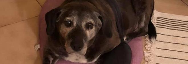 E' morta Pepa, la cagnolina che scoprì il neonato abbandonato al cimitero