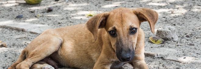 Adotti un cane? Il Comune ti offre fino a 300 euro all'anno