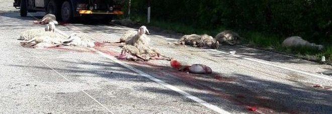 Camion travolge gregge di pecore strage 22 morte - La pagina della colorazione delle pecore smarrite ...
