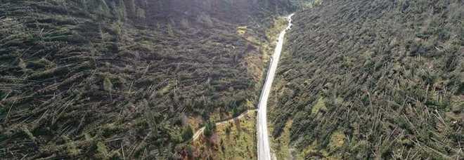 Risultati immagini per foto alberi veneto uragano