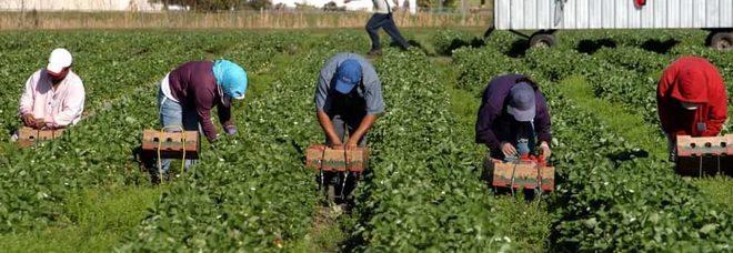 Lavoravano 12 ore nei campi per 10 euro: alla paga sottratti i soldi per il vitto (un piatto di lenticchie)